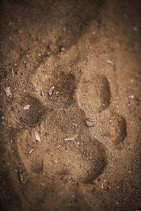 Trai Anfield Photographic Safaris Rantha
