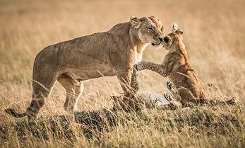 trai anfield photographic safaris -3973.