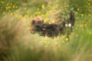 trai anfield photography safaris wolveri