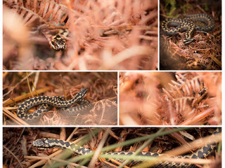 Adders, Adrenalin & Unblinking Red Eyes