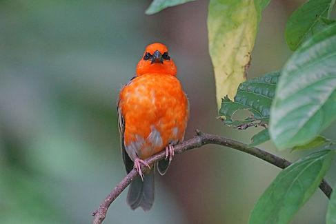 Madagascar Wildlife Photography Safari Trai Anfield bird