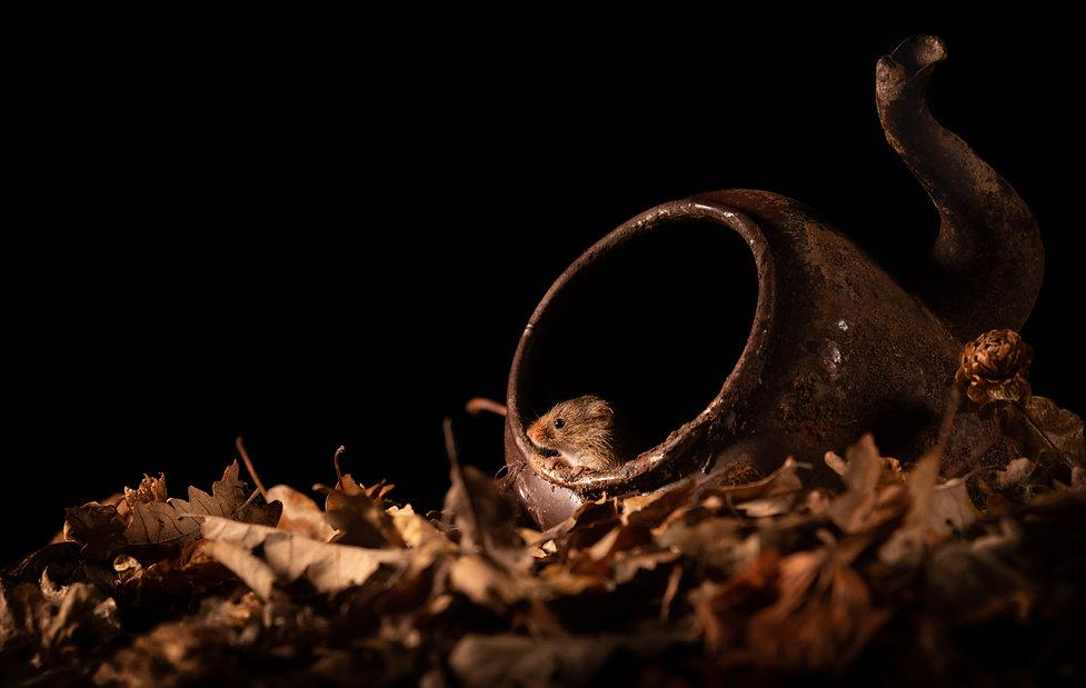 Trai Anfield harvest mouse teapot-7028_W