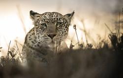 Trai Anfield Photography_boo!_WEB_WM_328