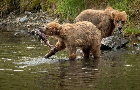 young bears fishing Kodiak-0546_WEB.jpg