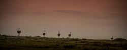 Trai Anfield Enlightened Photographic Safaris Kenya Serian rain-1424.jpg
