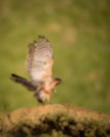 Trai Anfield Film & Photogrpahy sparrowh