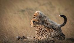 Trai Anfield Photography_cheetahs_WEB_WM