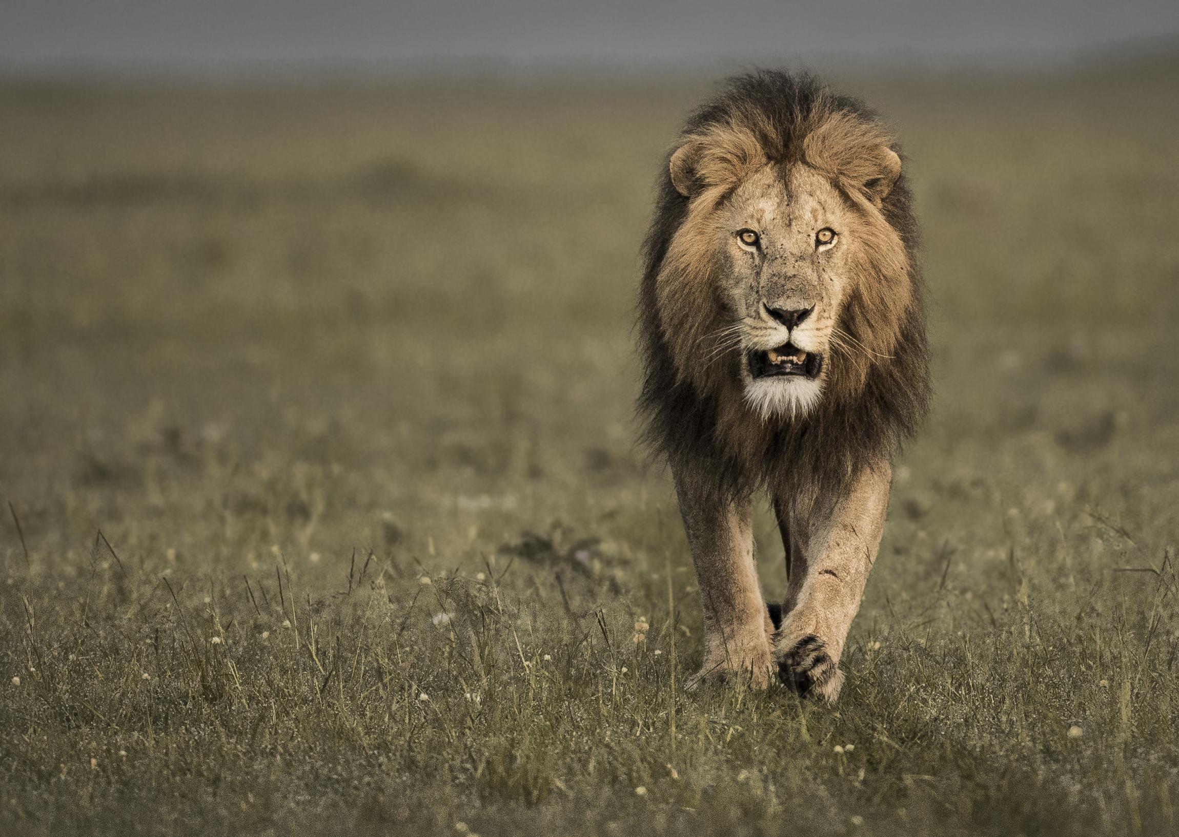 Trai Anfield Photographic Safaris Kenya