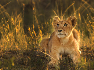 World Lion Day: Hope and Heartbreak