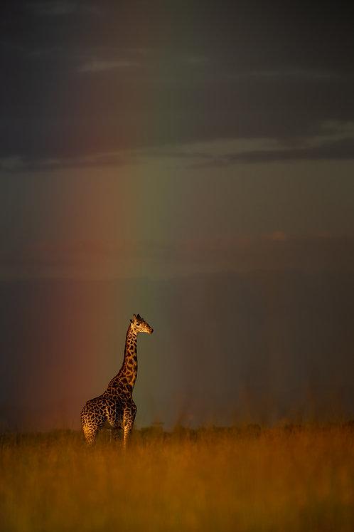 Giraffe for Deb Polay vertical