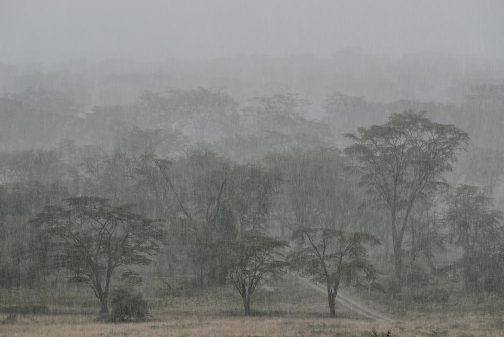 _DSC6649Maasai Mara Kenya.jpg