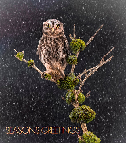 Seasonal Greeting Cards 29 October 2021