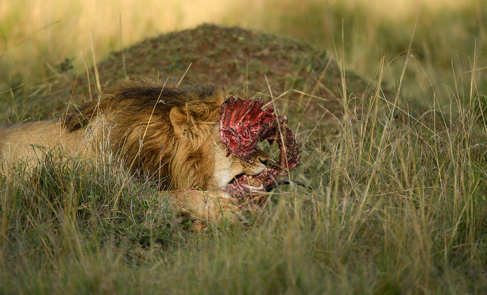 Ngere Serian hyenas edit-9470_WEB.jpg