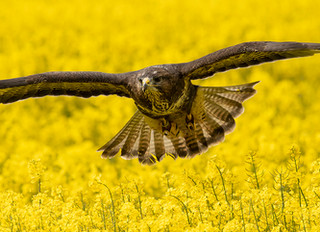 A Celebration of Home Grown Wildlife…And Being Able To Access It