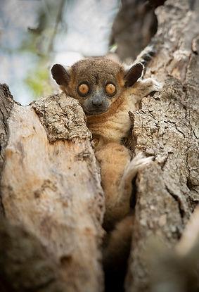 sportif lemur Madagascar-0897.jpg
