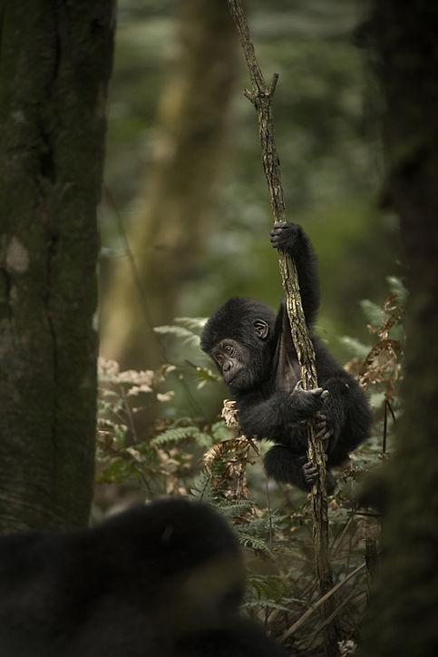 Trai Anfield Photography Safaris Uganda