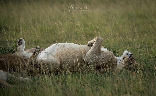 Naming A Mara Lion
