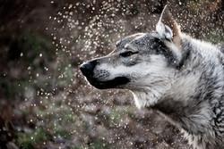wolf-0826.jpg