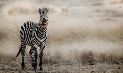 trai anfield photographic safaris -1018.