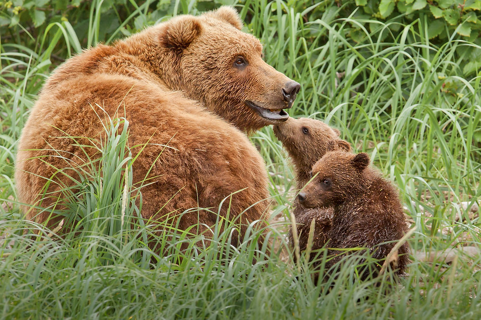 _MG_KWLsow and cubs 7707 (2).jpg