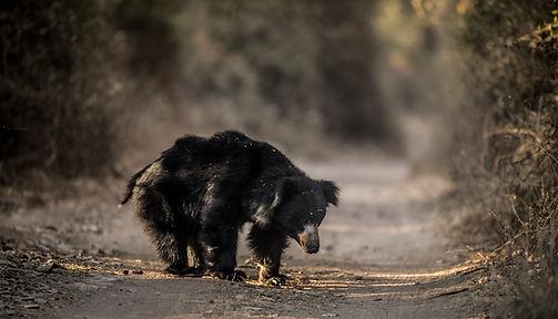 Trai_Anfield_Photography_Safaris_India_S