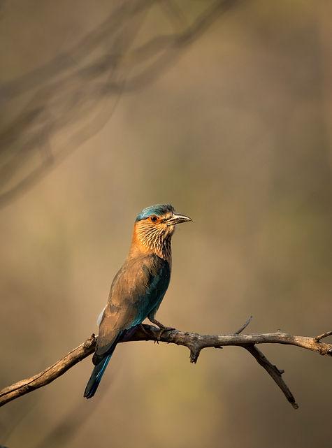 Trai_Anfield_Photography_Safaris_India_r