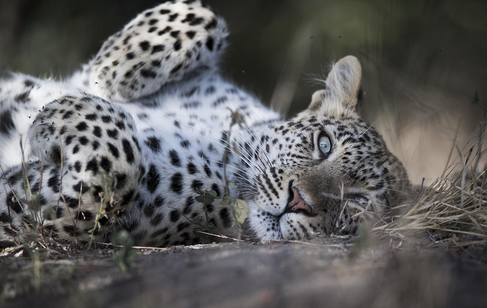 trai anfield photography Safaris Umlani