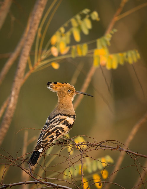 Trai_Anfield_Photography_Safaris_India_H