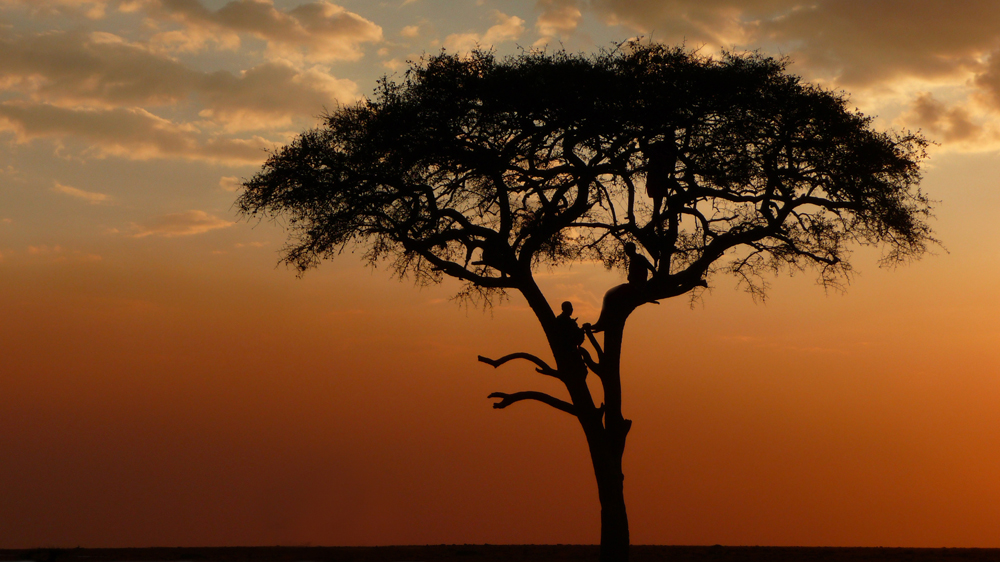 Treehouse Mara