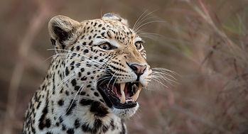 trai anfield photographic safaris -3149.