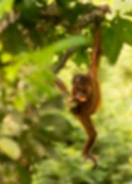 Trai Anfield Photography Safaris young o