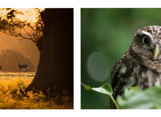 Best of British Wildlife
