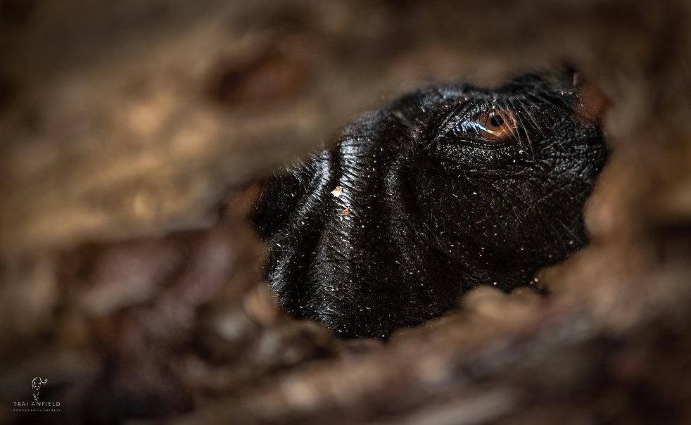 Uganda Photography Safari Gorilla Photography Trai Anfield