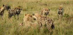 Ngere Serian hyenas edit-9666_WEB.jpg