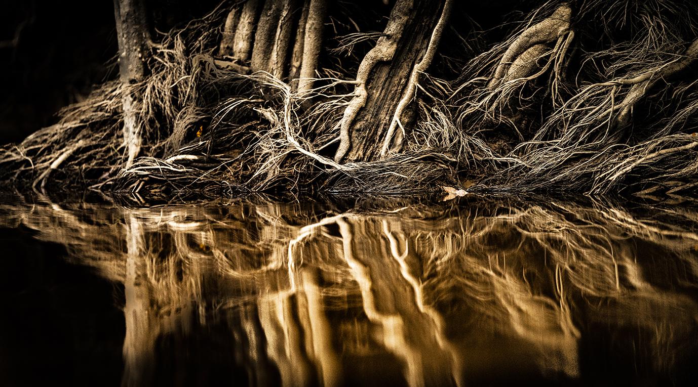 trai anfield photographic safaris mangro
