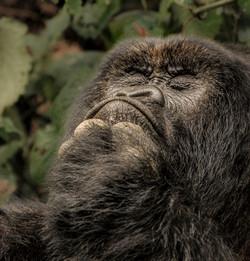 Rwanda Gorillas EDIT-7109_WEB.jpg