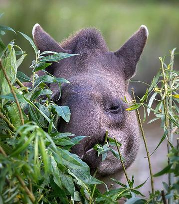 Brazil Photography Safari Trai Anfield Photography  taipir