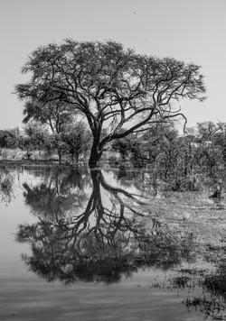 trai anfield photographic safaris -8010.