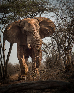 elephant .jpg