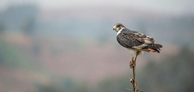 Trai Anfield Photography Safaris Augur b