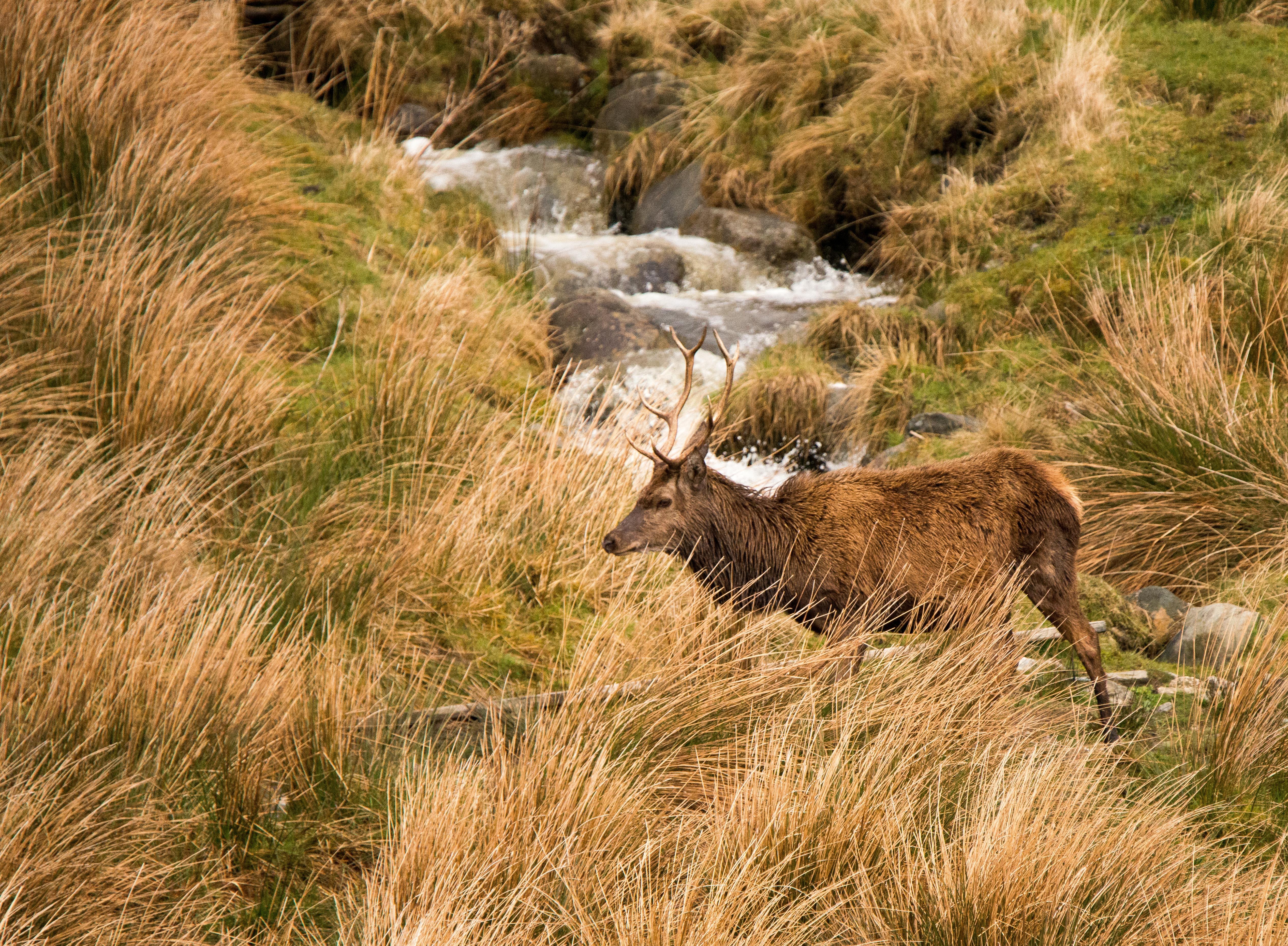 Red Deer-6396[1].jpg