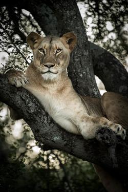 trai anfield photography Safaris Zimanga
