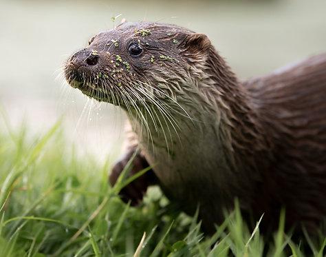 British Wildlife 3 Days: 21-23 AUGUST 2021
