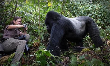 Uganda Photography Safari Gorilla Photography Trai Anfield Photography
