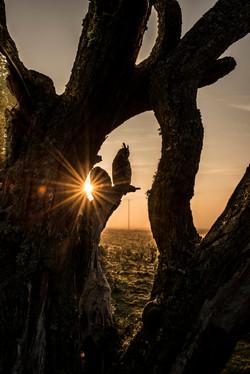 Andy Howey BoP long eared owl EDIT-9040_WEB.jpg