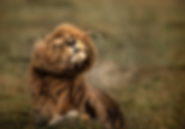 Microclimate Greatest Maasai Mara Photog
