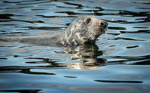 Lindisfarne Seal_DSC3350_WEB.jpg