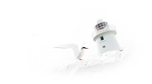 Tern Right At The Lighthouse