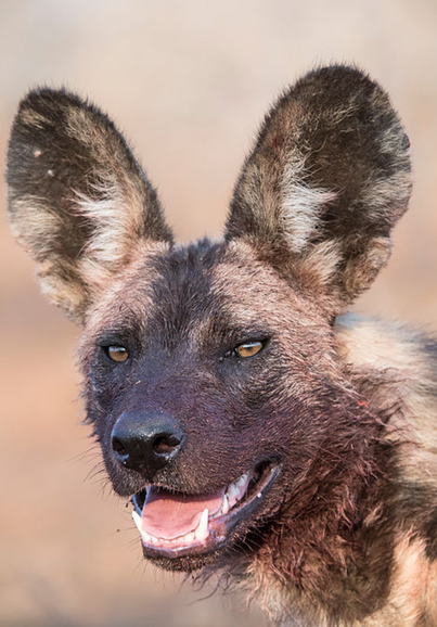 Trai Anfield Photogrpahy Safaris