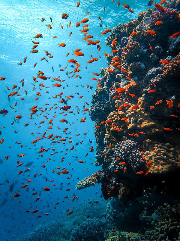 Jordan Photography Tour | Trai Anfield Photography Safaris | Red Sea | Diving